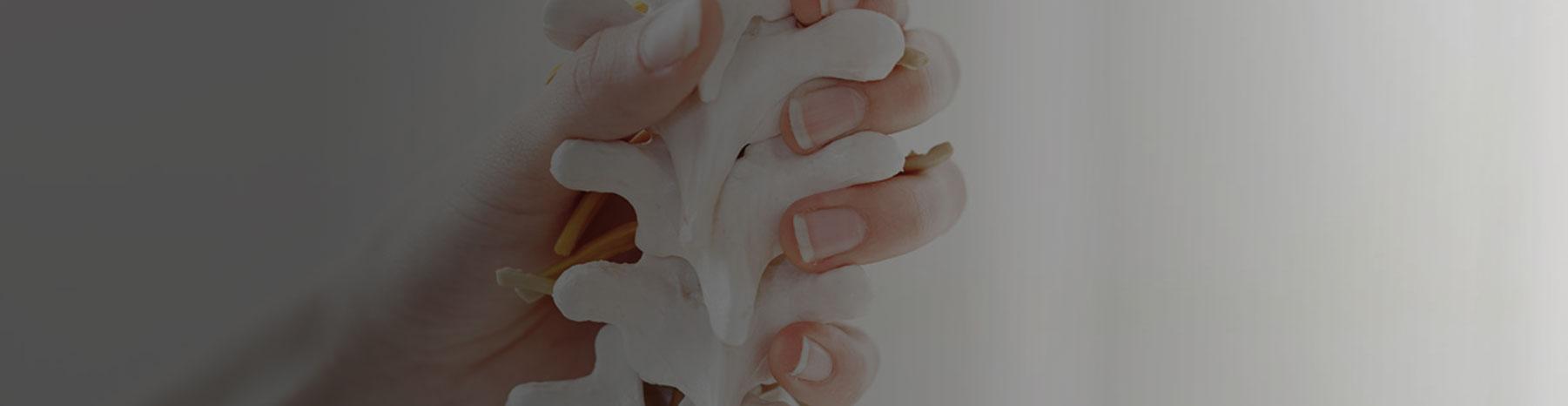Body Reform Spine Care Inner Banner